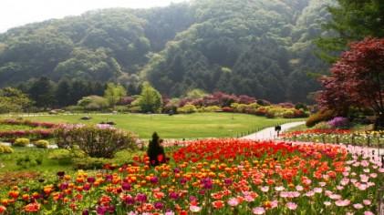 아침고요수목원 봄나들이 봄꽃축제 2018