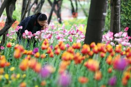 한택식물원 봄꽃페스티벌 2018