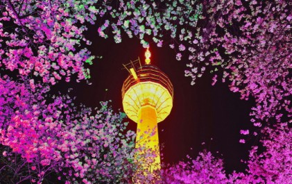 이월드 별빛벚꽃축제 2018