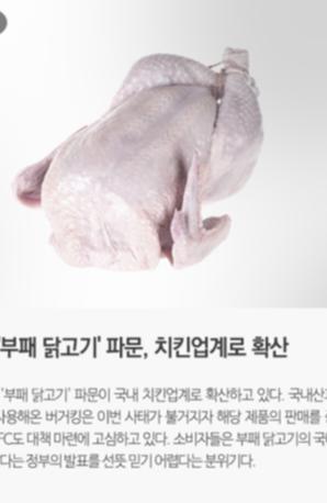부패 닭고기